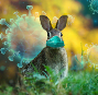 Easter Bunny Graphic